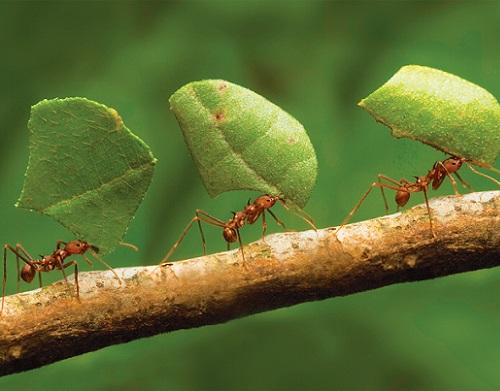 Remedios caseros para eliminar las hormigas de casa de - Remedios caseros para eliminar hormigas en casa ...