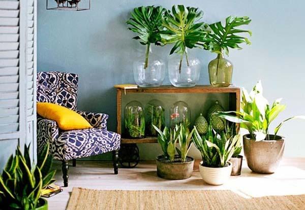 Decoraci n decoraci n del hogar con plantas for Decoracion con plantas