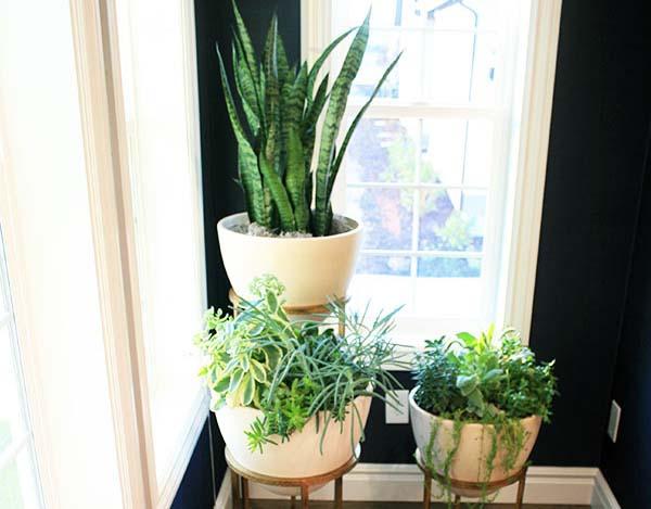decoracion-con-plantas