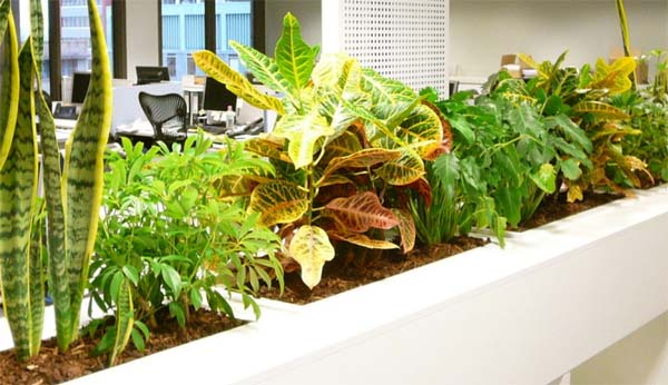 plantas-para-insonorizar-la-oficina