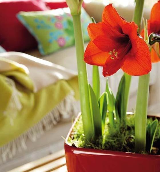 decoracion-flores-altas